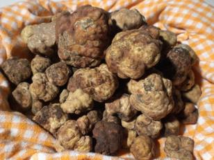 Bianchetto truffel