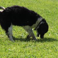 cane ricerca tartufo