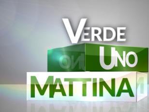 Tartufi Nacci a Uno Mattina